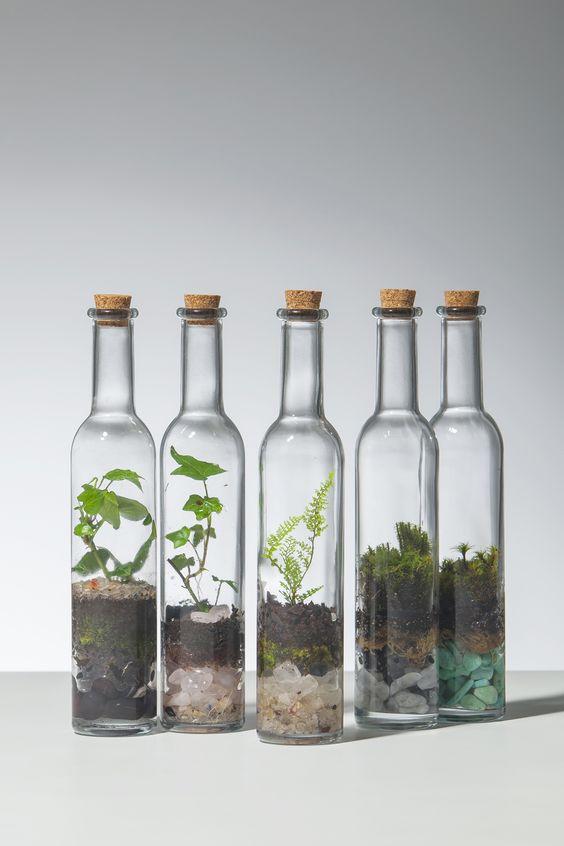 jardinagem_terrareo 2