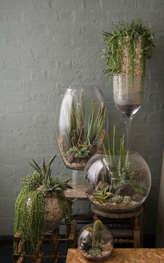 jardinagem_terrareo 4